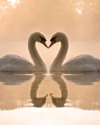 Two Swans - Obrázkek zdarma pro iPhone 3G