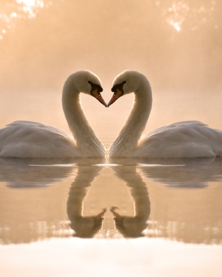 Two Swans - Obrázkek zdarma pro Nokia C2-00