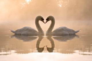 Two Swans - Obrázkek zdarma pro Samsung Galaxy Tab 3 8.0