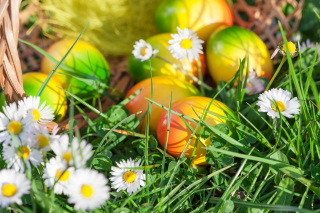 Chamomile and colored eggs - Obrázkek zdarma pro Widescreen Desktop PC 1440x900