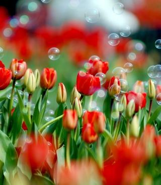 Tulips And Bubbles - Obrázkek zdarma pro Nokia X3-02