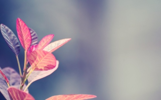 Pink Leaves Background for Android, iPhone and iPad