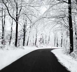 White Forest - Obrázkek zdarma pro 208x208