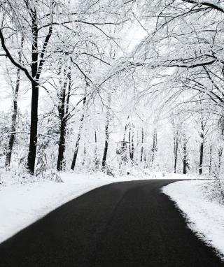 White Forest - Obrázkek zdarma pro 352x416