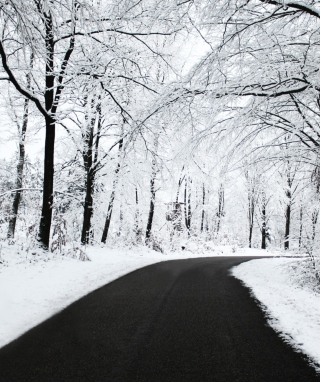 White Forest - Obrázkek zdarma pro Nokia Asha 503