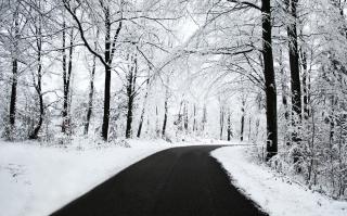 White Forest - Obrázkek zdarma pro Desktop Netbook 1366x768 HD