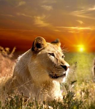 Lions In Kruger National Park - Obrázkek zdarma pro Nokia C5-05
