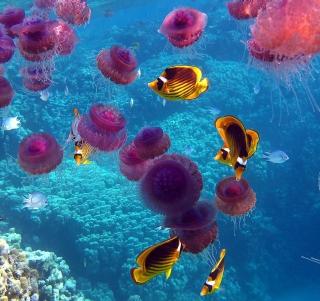 Pink Jellyfish And Yellow Fish - Obrázkek zdarma pro iPad