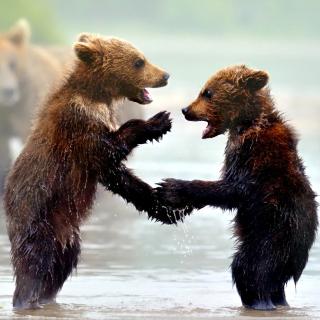 Bear cubs - Obrázkek zdarma pro iPad 2