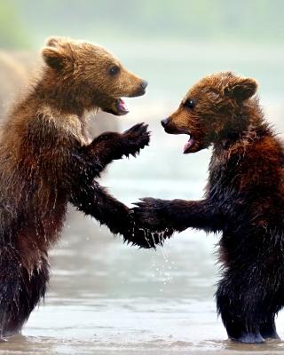 Bear cubs - Obrázkek zdarma pro Nokia 300 Asha