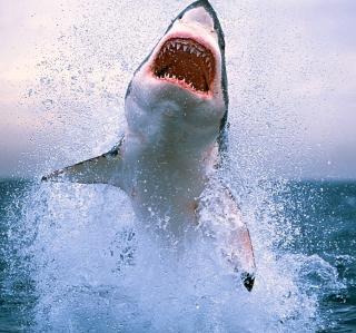 Dangerous Shark - Obrázkek zdarma pro iPad mini