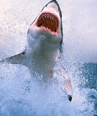 Dangerous Shark - Obrázkek zdarma pro iPhone 4S
