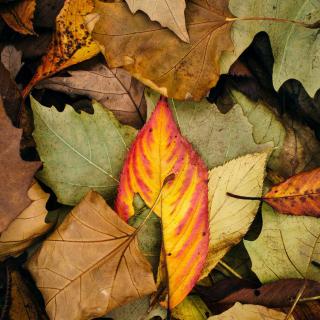 Autumn Leaves Artwork - Obrázkek zdarma pro iPad