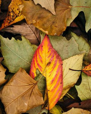 Autumn Leaves Artwork - Obrázkek zdarma pro Nokia Asha 300