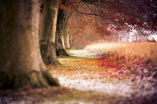 Magical Autumn Forest - Fondos de pantalla gratis