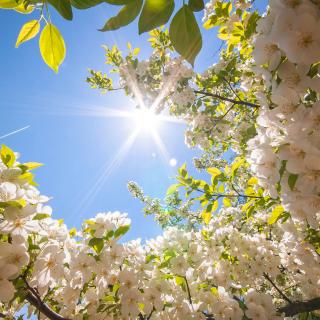 Spring Sunlights - Obrázkek zdarma pro iPad 2