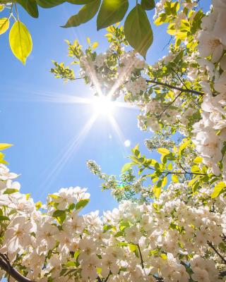 Spring Sunlights - Obrázkek zdarma pro Nokia Asha 306
