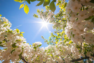 Free Spring Sunlights Picture for Android, iPhone and iPad