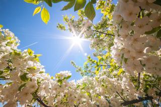 Spring Sunlights - Obrázkek zdarma pro 1600x1200