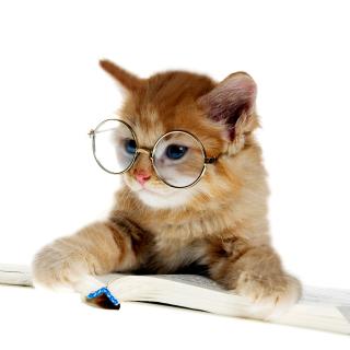 Clever Kitten - Obrázkek zdarma pro iPad Air