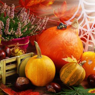 Harvest Still Life - Obrázkek zdarma pro iPad 2