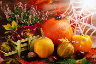 Harvest Still Life Background for Android, iPhone and iPad