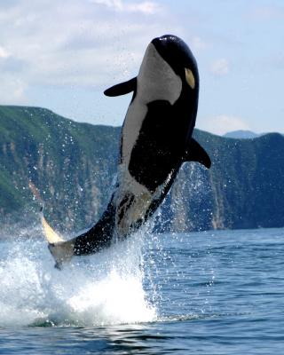 Orca in the Atlantic Ocean - Obrázkek zdarma pro Nokia X1-01