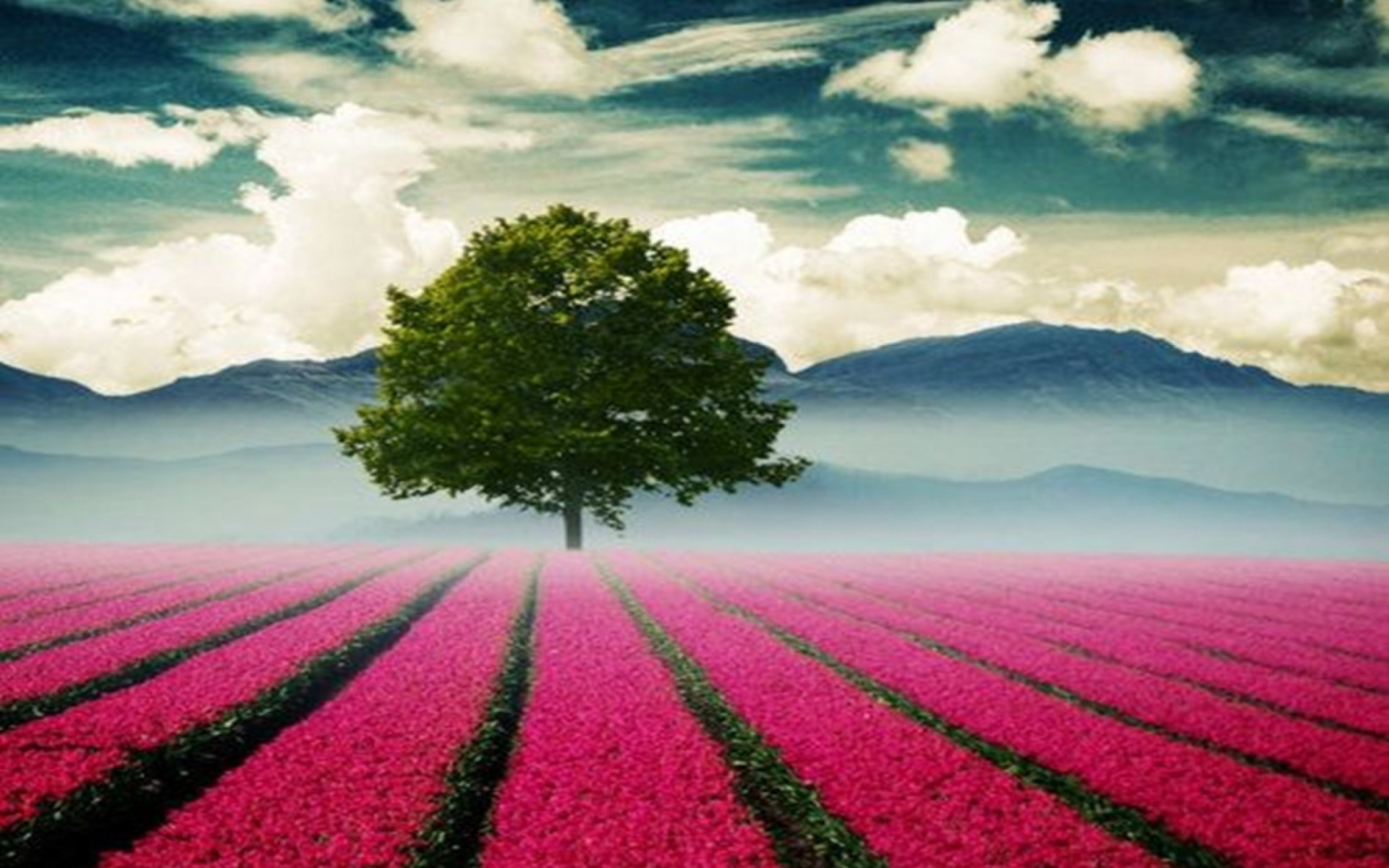 Beautiful landscape with tree and pink flower field for Beautiful flower landscapes