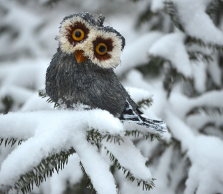 Funny Fluffy Eyes Owl - Obrázkek zdarma pro 1024x1024