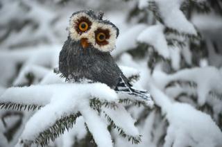 Funny Fluffy Eyes Owl - Obrázkek zdarma pro 1200x1024