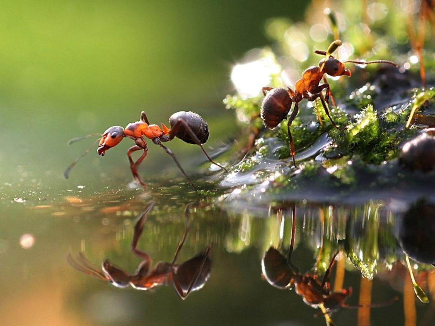 Screenshot №1 pro téma Ant 1400x1050