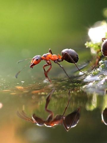 Screenshot №1 pro téma Ant 360x480