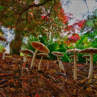 Wild Mushrooms - Obrázkek zdarma pro 320x320
