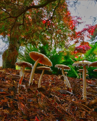 Wild Mushrooms - Obrázkek zdarma pro 240x320