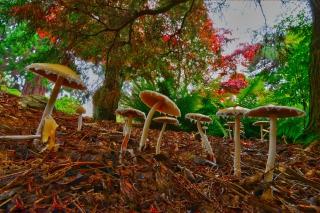Wild Mushrooms - Obrázkek zdarma pro LG P700 Optimus L7