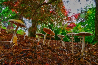 Wild Mushrooms - Obrázkek zdarma pro Android 960x800