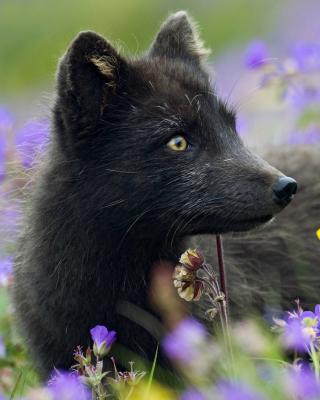Arctic Fox - Obrázkek zdarma pro Nokia Asha 503