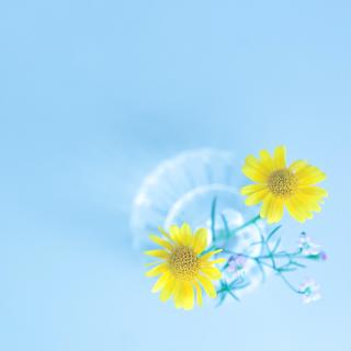 Simple flower in vase - Obrázkek zdarma pro iPad 2