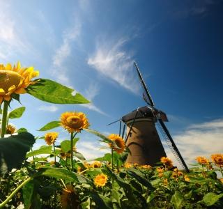 Mill In Sunflower Field - Obrázkek zdarma pro iPad