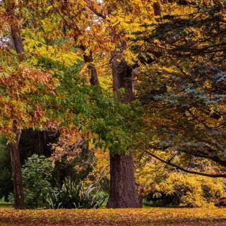 Australian National Botanic Gardens - Obrázkek zdarma pro iPad mini 2