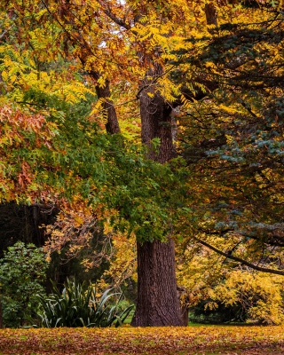 Australian National Botanic Gardens - Obrázkek zdarma pro Nokia 206 Asha