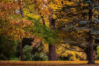 Australian National Botanic Gardens - Obrázkek zdarma pro LG Optimus L9 P760