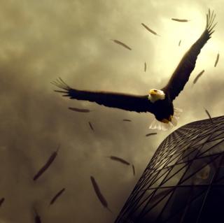 Eagle Flight - Obrázkek zdarma pro 208x208