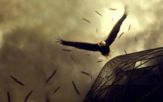 Eagle Flight - Obrázkek zdarma pro Nokia Asha 302