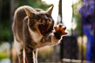 Funny Yawning Wallpaper for Android, iPhone and iPad