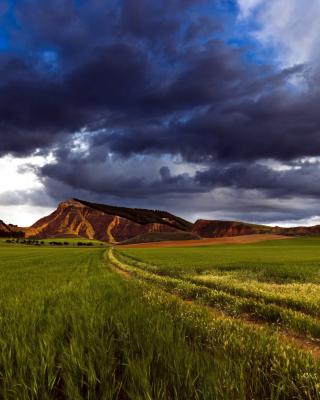 Field and Sky - Obrázkek zdarma pro 480x854
