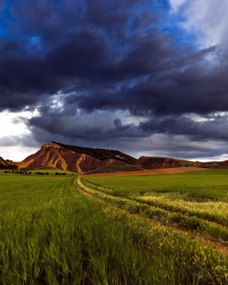 Field and Sky - Obrázkek zdarma pro Nokia Asha 306