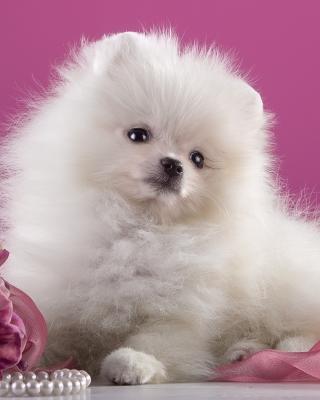 Spitz Puppy - Obrázkek zdarma pro Nokia C6-01