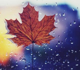 Dried Maple Leaf - Obrázkek zdarma pro iPad