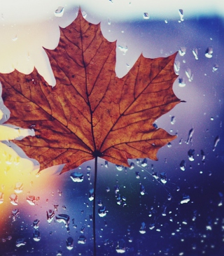 Dried Maple Leaf - Obrázkek zdarma pro 132x176